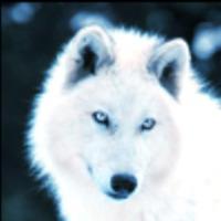 Main whitewolf eyes avatar
