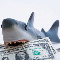 Main shark money