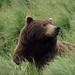 Thumb bear