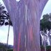 Thumb gumtree
