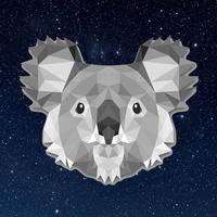 Main koala square 001