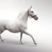 Thumb white horse