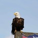 Thumb eagle on sign
