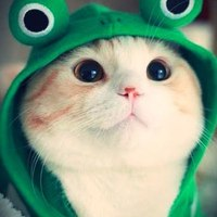 https://pwntastic-avatar-production.s3.amazonaws.com/uploads/user/avatar/21894/main_Cat-Frog-Hoodie.jpg