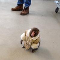 Main monkey 1