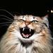 Thumb angrycat98125846 barbara singer2040x1471