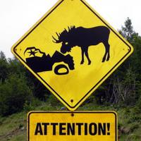 Main newfoundland moose sign