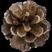 Thumb pine cone