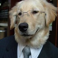 Main dog in suit with glasses