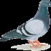 Thumb newsletter pigeon