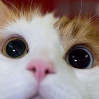 Main cat1