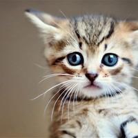 Main cat 2830677b