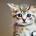 Thumb cat 2830677b