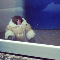 Main ikea monkey