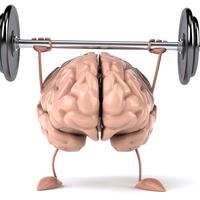 Main fit brain