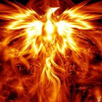 Main phoenix