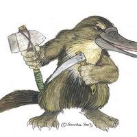 Main platypus