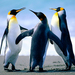 Thumb penguins