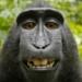 Thumb monkey selfie
