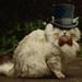 Thumb cat