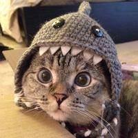 Main d82bb4bfc6b8f211cde5fcbbc14588d1  shark hat cat shark
